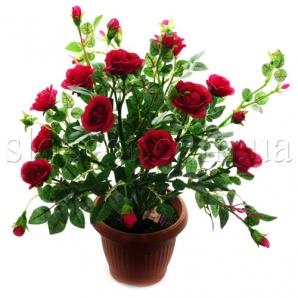 Куст красных роз в горшке