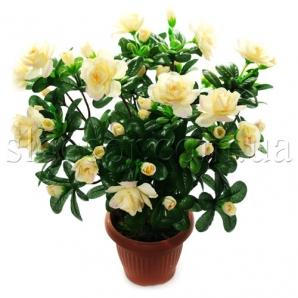 Распродажа Искусственные Цветы В Горшках - товары со 18