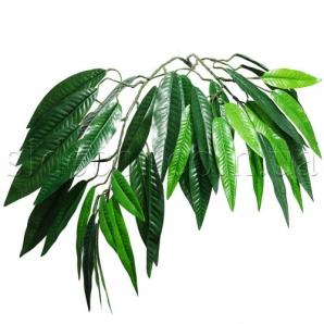 Ветка мангового дерева
